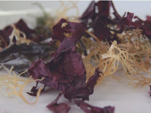 オーガニック海藻とAlgAran 社の取り組み