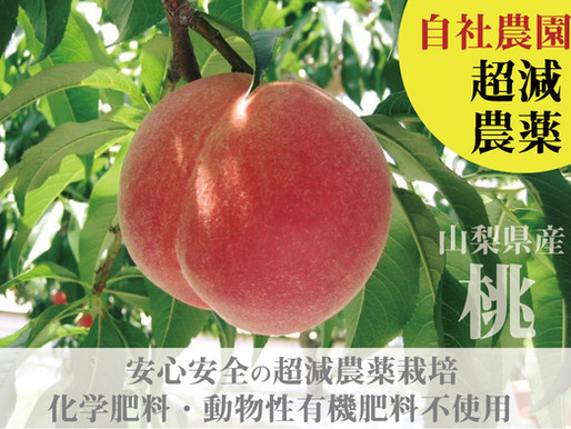 自社農園だからできる強み!自然で安全な土づくり。美味しい桃だ!と言われる喜び