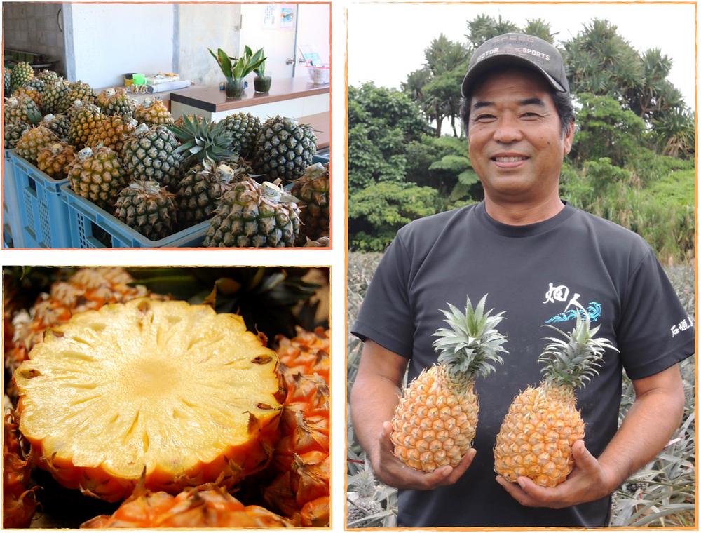 パイナップルボゴール種はその甘さと香りから現地沖縄での人気 もさることながら、お土産用にも大人気のパイナップルです。お 召し上がりの際は、冷蔵庫で冷やしてその濃厚な味と香りをお楽 しみください。