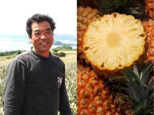 ボゴールパインは抜群の甘さ香りで近年大人気の品種です。またちぎって食べることもえきるため、スナックパインとも呼ばれます。石垣島で生食パイン栽培のパイオニア平安名貞一さん。戦後、石垣島へ入植した先代の意志を受け継ぎ30代で東京から島に戻りパイン栽培を始めます。当時の主流は缶詰用。当時の方針は大きくとってたくさん出す。しかし輸入自由化の波にのまれ缶詰工場は相次いで閉鎖。生食パインにわずかな希望の光を感じ栽培を一から始めたのでした。大きくたくさんとる缶詰用栽培では味が薄く商品になりません。生食でもおいしく作るために栽培方法の大転換を決め、小ぶりにつくり味を凝縮させる栽培を確立したのでした。今では沖縄県各地で生食パインを栽培していますが、生食パイン栽培の開拓者として「誰にも負けない味」を大事にしています。平安名さん自慢の国産スナックパインぜひご賞味ください。