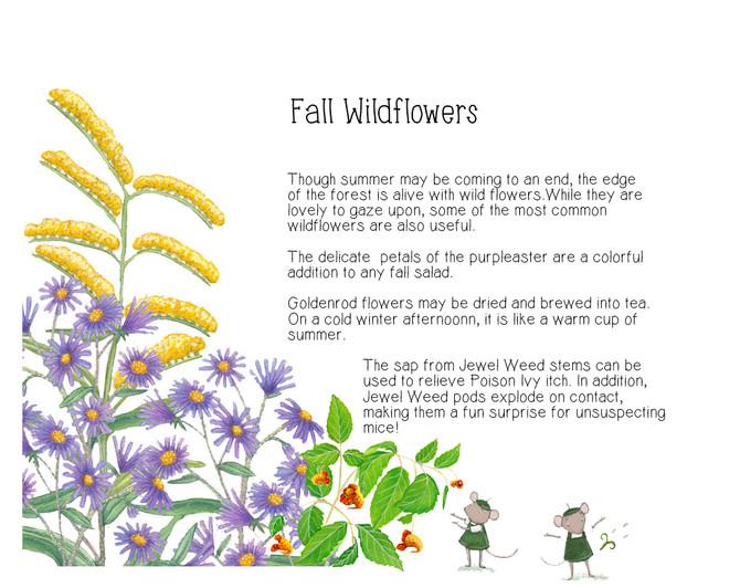 Fall Wild Flowers