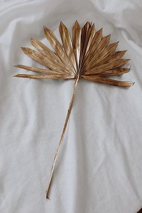 Palmsun GOLD