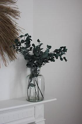 Eucalyptus stabilisé