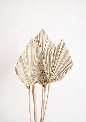 Palm spear naturel