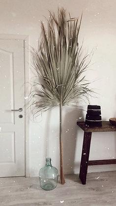 Feuille de palmier XXL