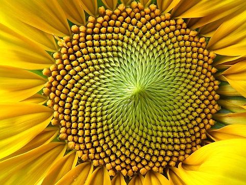 flower-194831_640.jpg