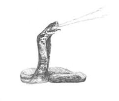 spitting cobra.jpg