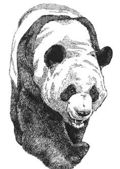Panda .jpg