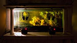 Aquarium Gallery _ 1
