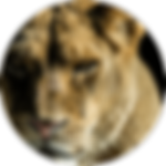 Courage-Lion.png