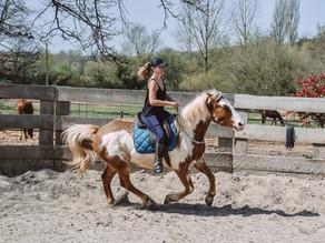 Ma vision de l'équitation depuis que j'ai mon propre cheval...