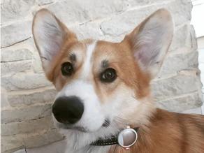 Petkit, le tracker d'activités pour chiens & chats