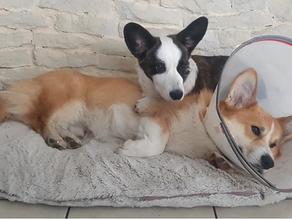 Assurance pour chien : indispensable ou futile?
