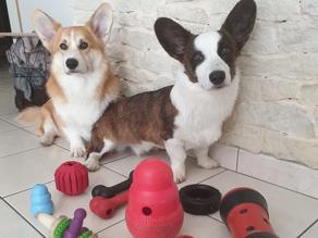 Jouets d'occupation & jouets d'intelligence pour chien !