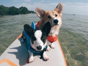 Cani-paddle au lac de Biscarrosse !