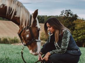 Débourrer son jeune cheval
