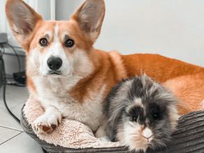 La cohabitation chat, chien & lapin !