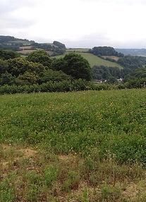 exmoor view.jpg