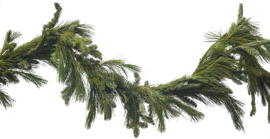 kissclipart-real-pine-garland-clipart-ga