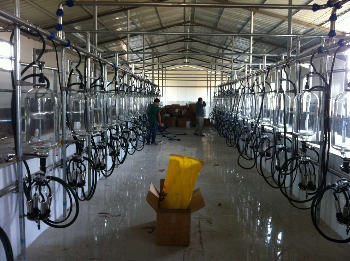 Milking Parlor for 50 Cows
