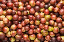 Organic Camu Camu Berries - 4mul8 Organi