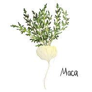 Maca Roots - 4mul8 Organics.jpg