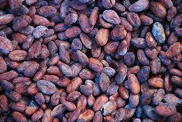 Organic Raw Cacao Beans - 4mul8 Organics