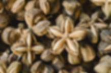 sacha inchi 5 - 4mul8 Organics.jpg