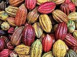 Cacao Pods - 4mul8 Organics.jpg