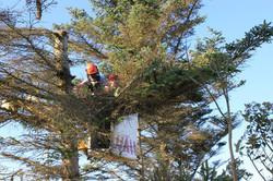 Des Moines Safe Tree Services