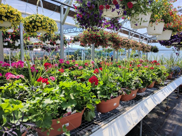 Best annuals landscaping pickering