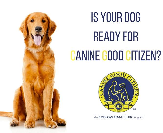 CGC / Safe Dog Testing