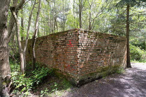 Hargate Forest Tunnels-10.jpg