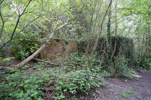 Hargate Forest Tunnels-06.jpg
