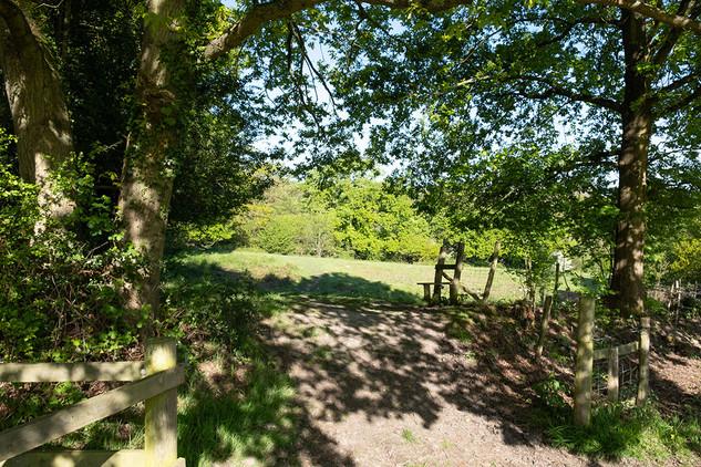 Barnetts-Wood-Nature-Reserve-18.jpg