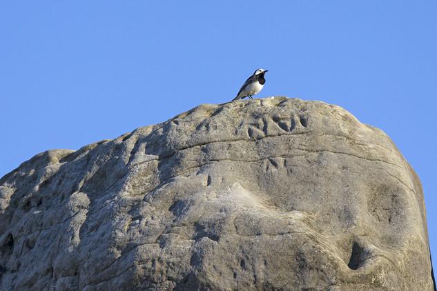 Wellington-Rocks44.jpg