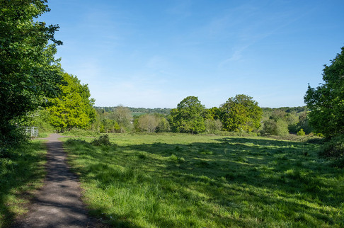 Barnetts-Wood-Nature-Reserve-03.jpg