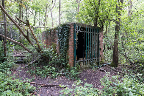 Hargate Forest Tunnels-05.jpg