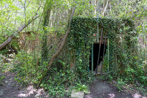 Hargate Forest Tunnels-11.jpg