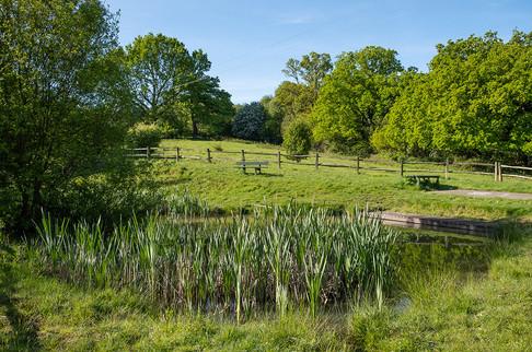 Barnetts-Wood-Nature-Reserve-19.jpg