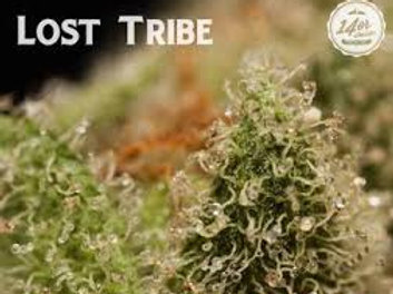 14er - Lost Tribe - Loose