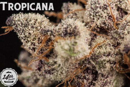 14er - Tropicanna - 7g