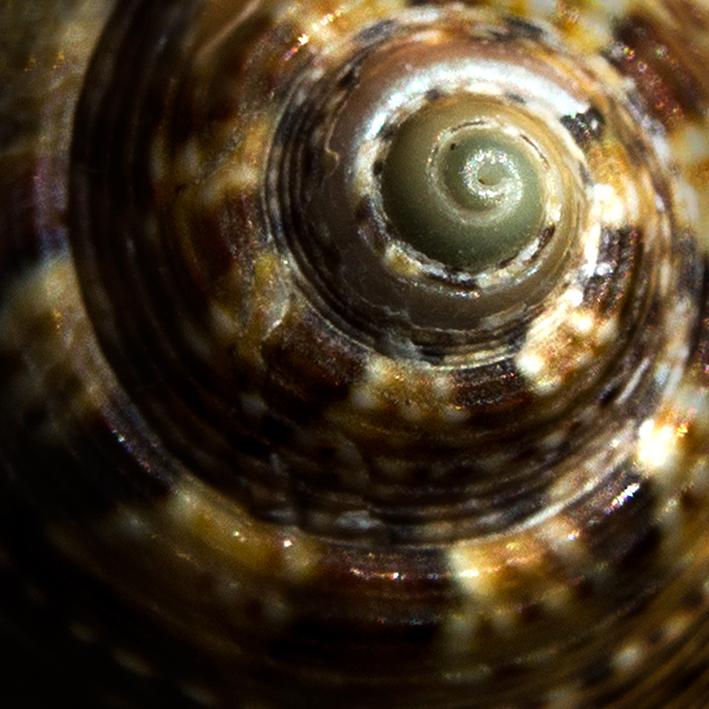 python-2