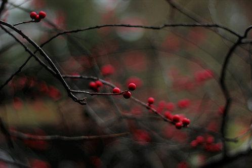 "carte postale ""l'hiver"""