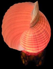 Tonna Oleria Lamp