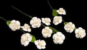 White Cay Cay Flower Stem (DZ)