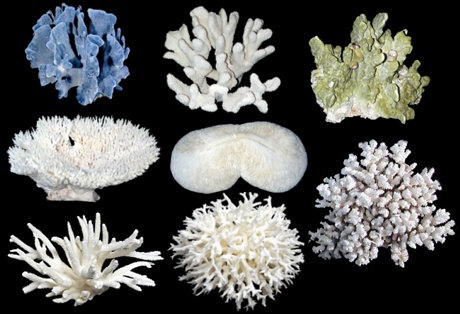8 Pc Assorted Coral