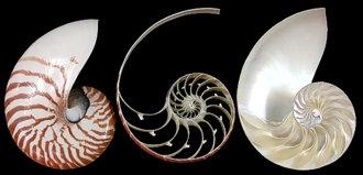 Nautilus Set 3 Sections Set