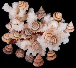 Candy Snails (hun)