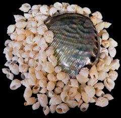 White Cornball Shells (kilo)